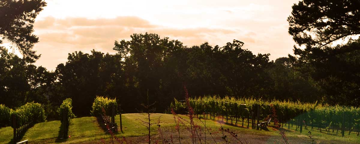 Our East Texas Vineyard