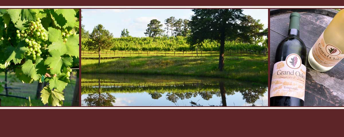 Northeast Texas Vineyard and Winery